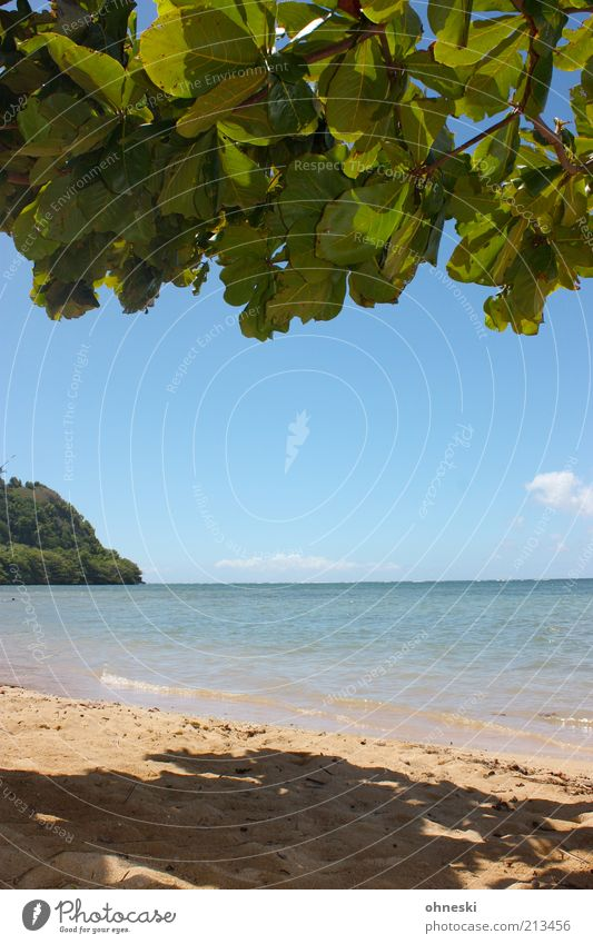 Nature Water Sky Tree Ocean Summer Beach Vacation & Travel Leaf Relaxation Freedom Landscape Air Contentment Coast Island