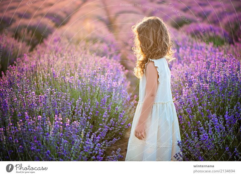 Lavender golden light filed Girl 1 Human being 3 - 8 years Child Infancy Environment Sunlight Summer Field Dress Blonde Curl Looking Stand Dream Wait Authentic
