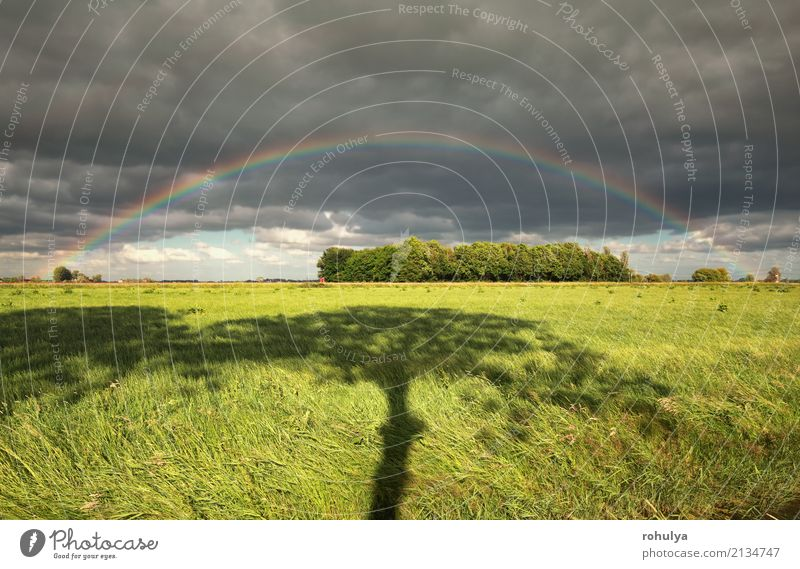 rainbow and tree shadow on green meadow Nature Landscape Sky Clouds Summer Weather Beautiful weather Storm Rain Tree Grass Meadow Field Green Rainbow colorful