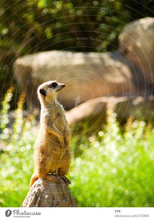 Nature Plant Summer Animal Grass Environment Bushes Observe Zoo Curiosity Wild animal Testing & Control Beautiful weather Brash Arrogant