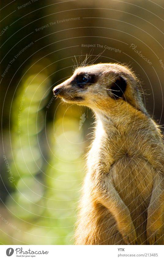 Nature Beautiful Summer Animal Environment Animal face Pelt Zoo Curiosity Discover Cute Testing & Control Watchfulness Beautiful weather Interest Brash