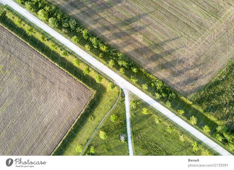 Nature Plant Tree Landscape Street Environment Meadow Lanes & trails Grass Design Park Field Growth Arrangement Perspective Agriculture