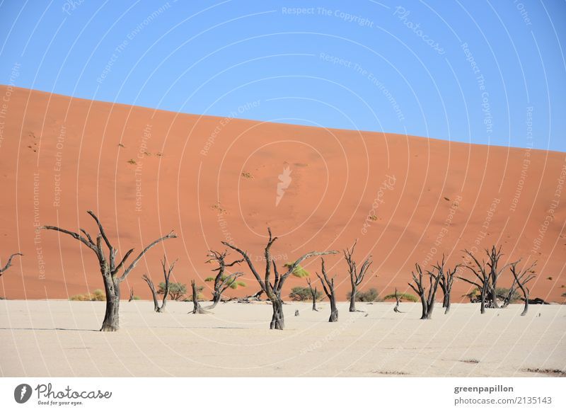 Todestal - Dead Vlei - Sossusvlei - Namibia Earth Sand Tree Desert Namib desert Dune Skeleton Log Hiking Gloomy Dry Death Tourism Colour photo