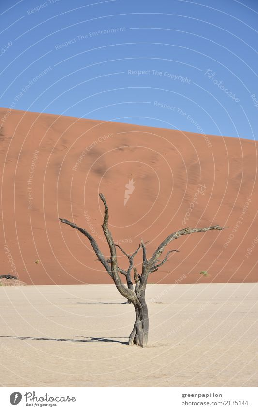 aridity Environment Nature Landscape Elements Earth Sand Sky Sun Warmth Drought Tree Desert Namib desert Namibia Vacation & Travel Hiking Gloomy Dry