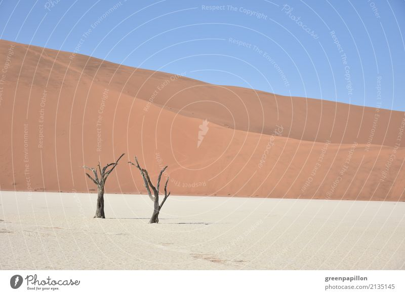 Todestal - Dead Vlei - Sossusvlei - Namibia Nature Landscape Earth Sand Tree Desert Namib desert Dune To dry up Hiking Gloomy Dry Blue Gold Red White Death