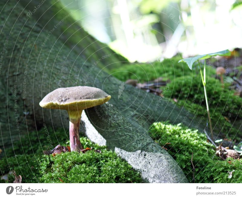 Nature Tree Plant Forest Environment Earth Growth Natural Mushroom Moss Elements Woodground Mushroom cap Wild plant