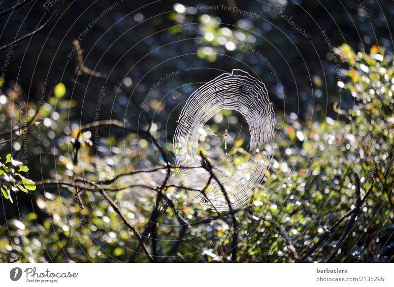 Nature Plant Dark Environment Moody Bright Illuminate Bushes Beginning Drops of water Climate Network Bizarre Hallowe'en Spider Spider's web