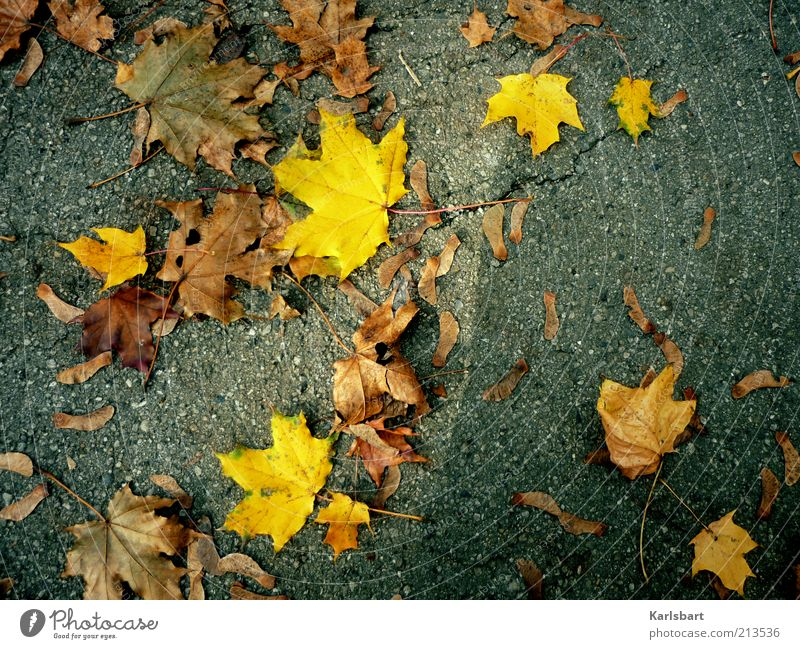 Nature Leaf Yellow Street Autumn Gray Lanes & trails Brown Weather Environment Multiple Ground Change Transience Decline