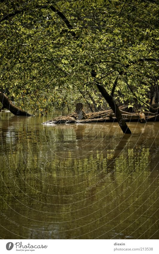 Nature Water Tree Green Plant Forest Landscape Brown Environment Wet Climate Branch Ascending Tree trunk River bank Climate change
