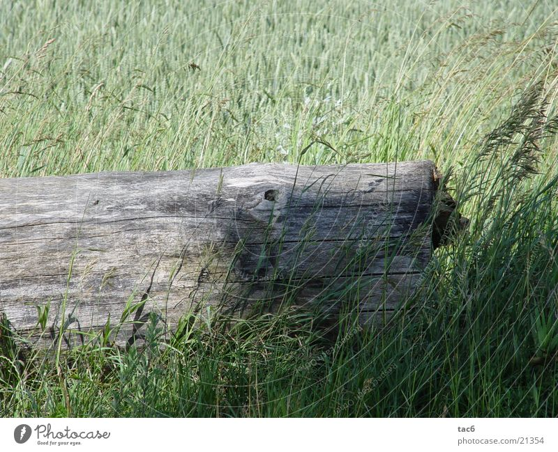 Shadows on wood Wood Field Green Tree Grass Nature Old Derelict Close-up