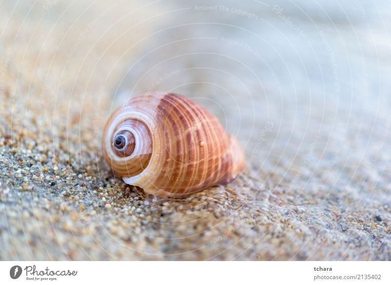 Seashell Nature Vacation & Travel Blue Summer Colour Beautiful Ocean Beach Natural Coast Sand Design Decoration Idyll Vantage point Beauty Photography