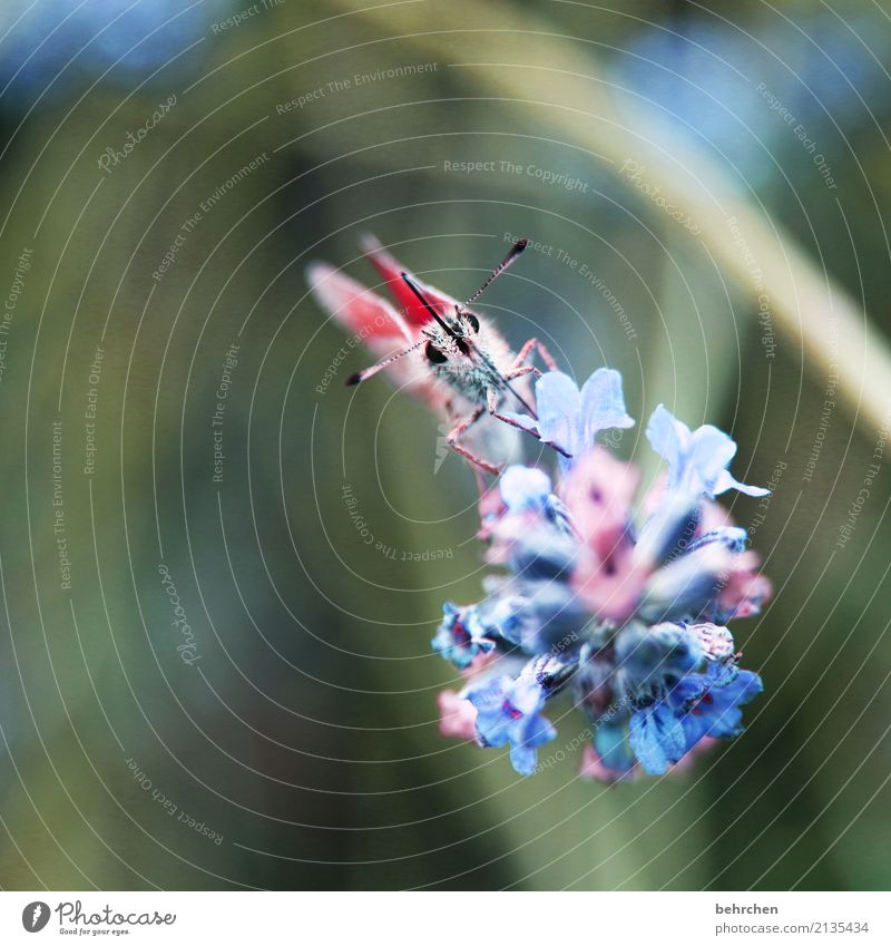 Delicate Nature Plant Animal Summer Beautiful weather Flower Leaf Blossom Lavender Garden Park Meadow Wild animal Butterfly Animal face Wing 1 Blossoming