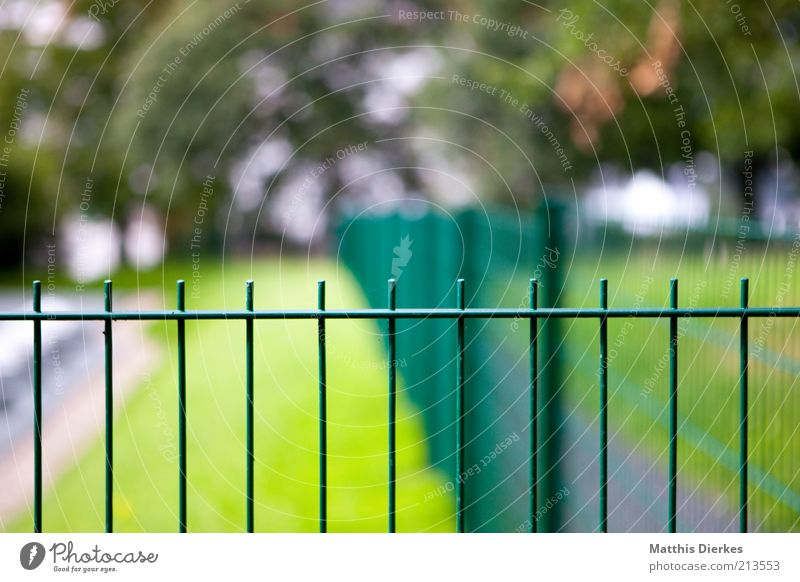 Nature Tree Green Meadow Fence Barrier Iron Grating Massive Vanishing point Fence post