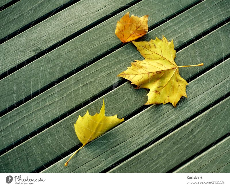 Nature Leaf Yellow Life Autumn Style Wood Line Wind Environment Change Transience Well-being Autumn leaves Autumnal