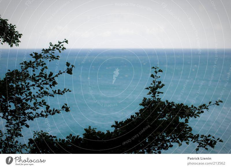Nature Water Tree Ocean Blue Plant Summer Calm Leaf Far-off places Happy Dream Landscape Air Moody Coast