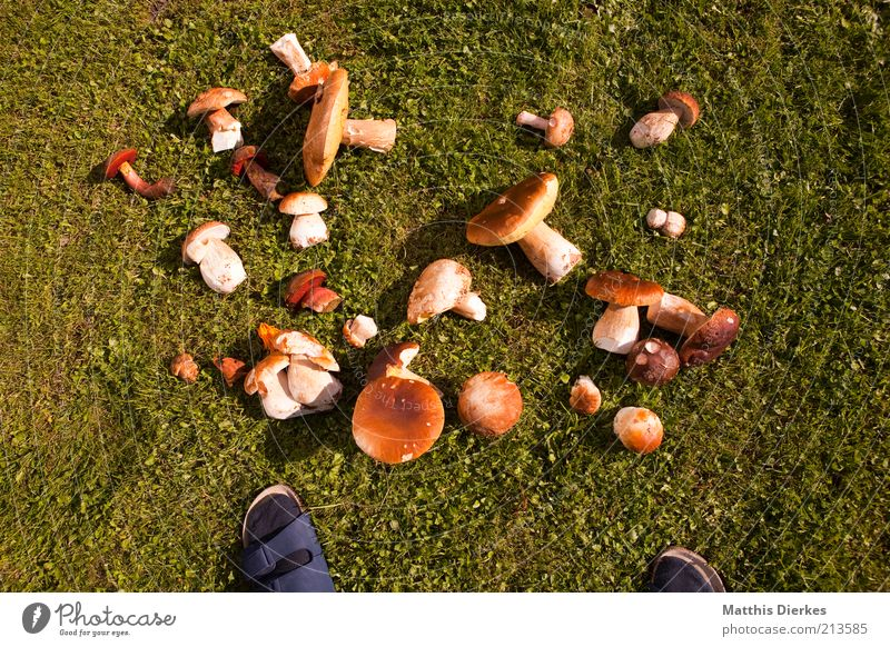 Nature Plant Summer Meadow Grass Feet Environment Search Multiple Many Mushroom Collection Difference Accumulation Find
