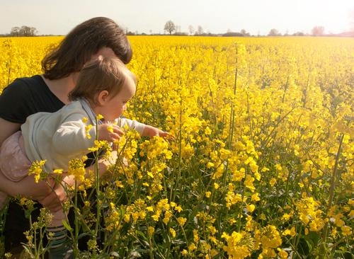 rapeseed pleasure Vacation & Travel Summer vacation Parenting Education Study Child Toddler Young woman Youth (Young adults) Mother Adults 1 - 3 years Nature