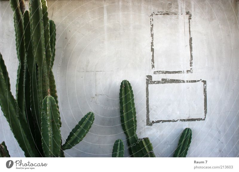one trimmed Cactus and two frames House (Residential Structure) Plant Building Wall (barrier) Wall (building) Facade Concrete Sign Ornament Line