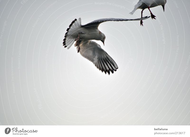 Sky Nature Summer Beach Ocean Animal Freedom Environment Coast Air Weather Bird Flying Wild animal Wing Baltic Sea