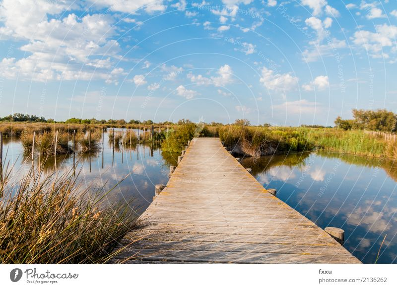 Wooden footbridge in the Camargue Footbridge Nature Water Common Reed Bridge Lake Landscape Wooden board Calm Far-off places Wood strip Woodway River Moody