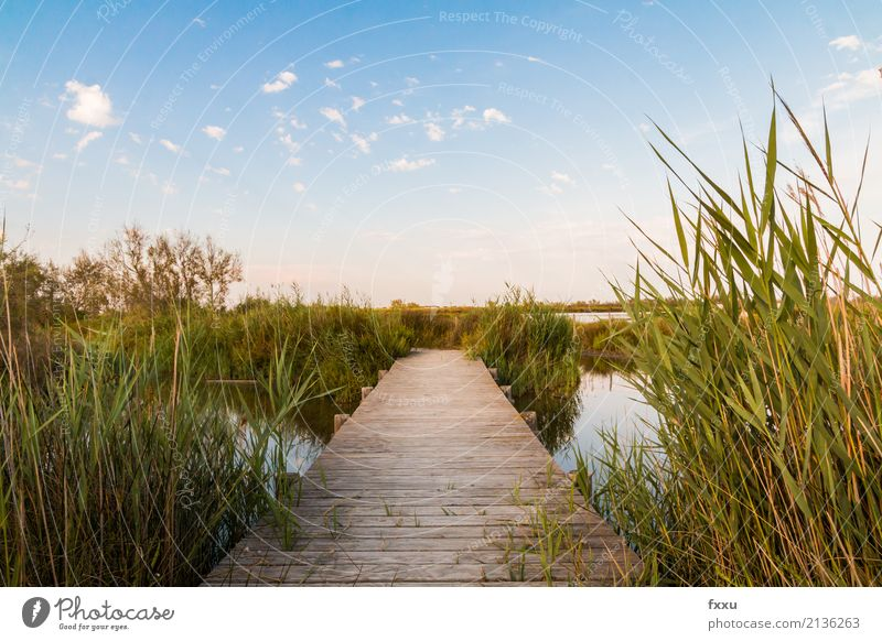 Wooden footbridge in the Camargue Footbridge Nature Water Common Reed Bridge Lake Landscape Wooden board Calm Far-off places wooden planks Woodway River Moody