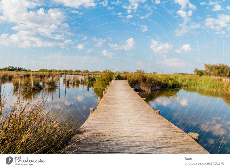 Wooden footbridge in the Camargue Nature Landscape Water Bog Marsh Saintes Maries de la Mer Arles France Europe Bridge Footbridge Observe To enjoy Hiking