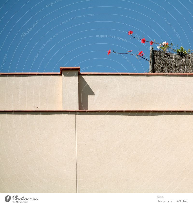Sky Flower Plant Summer House (Residential Structure) Wall (building) Above Blossom Garden Wall (barrier) Bright Facade Gloomy Direction Beautiful weather Plaster