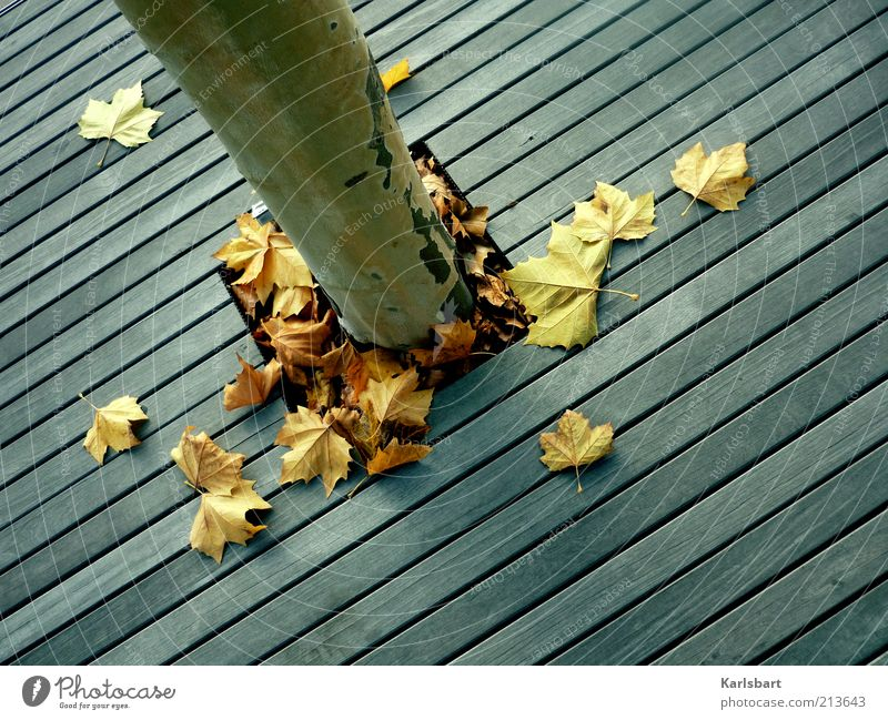 Nature Tree Leaf Life Autumn Wood Lanes & trails Line Environment Lifestyle Ground Change Transience Stripe Tree trunk