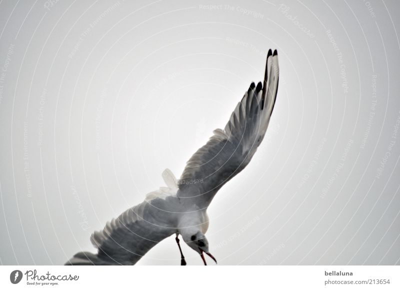 Nature Sky Ocean Summer Beach Vacation & Travel Animal Freedom Bird Coast Weather Environment Flying Feather Wing Scream