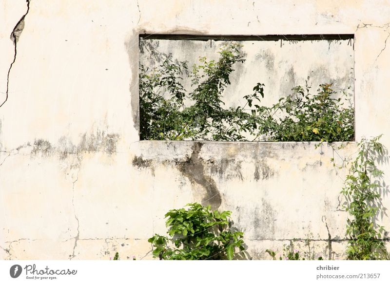 Old White Green Plant Leaf House (Residential Structure) Wall (building) Window Gray Wall (barrier) Concrete Growth Broken End Transience Decline
