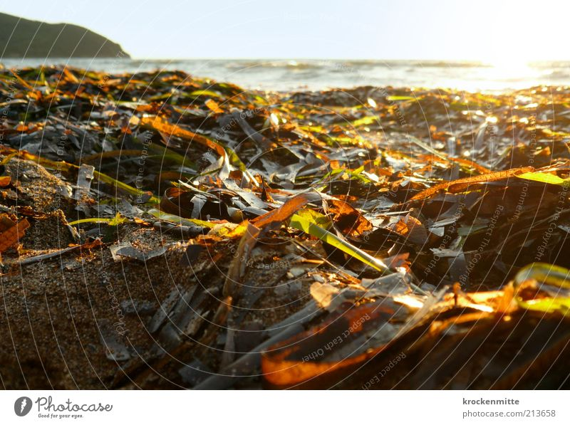 Nature Water Sun Ocean Green Plant Summer Beach Vacation & Travel Leaf Loneliness Sand Landscape Orange Coast Waves