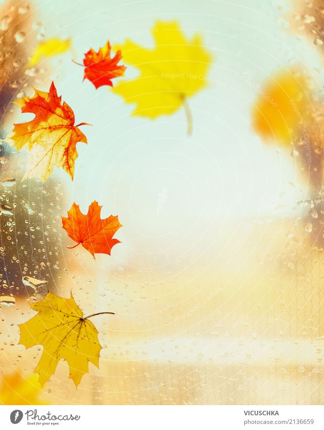 Colourful autumn leaves on window with raindrops Lifestyle Design Garden Nature Autumn Rain Leaf Park Yellow Background picture September October November