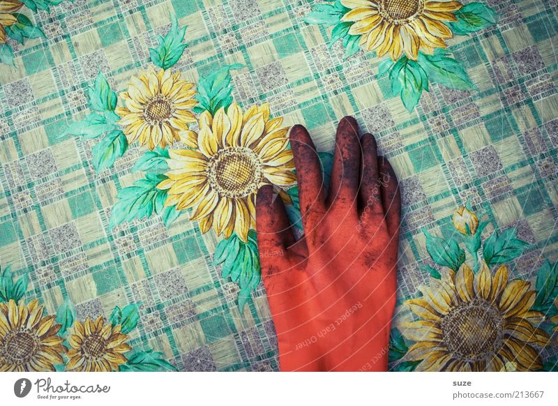 Hand Summer Work and employment Spring Orange Dirty Skin Earth Table Break Lie Leisure and hobbies Sunflower Completed Gloves
