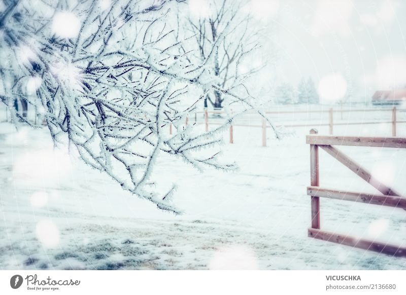 Nature Christmas & Advent Winter Lifestyle Snow Garden Park Beautiful weather Frost Village Fence Gate Winter mood Wooden fence