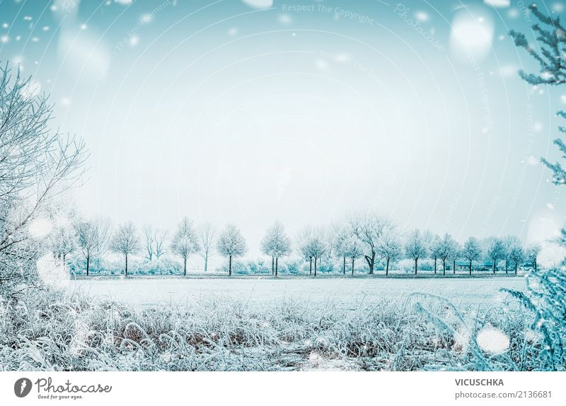 Nature Vacation & Travel Christmas & Advent Beautiful Tree Landscape Winter Lifestyle Background picture Meadow Snow Garden Moody Park Field Bushes