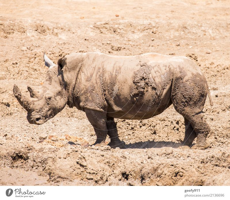 After the mud bath;-)))) Vacation & Travel Trip Adventure Safari Expedition Environment Nature Landscape Earth Sand Warmth Drought Desert Africa Animal