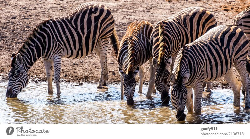 Thirsty!!! Vacation & Travel Trip Adventure Freedom Safari Expedition Environment Nature Landscape Earth Sand Water Warmth Drought Pond Desert Animal