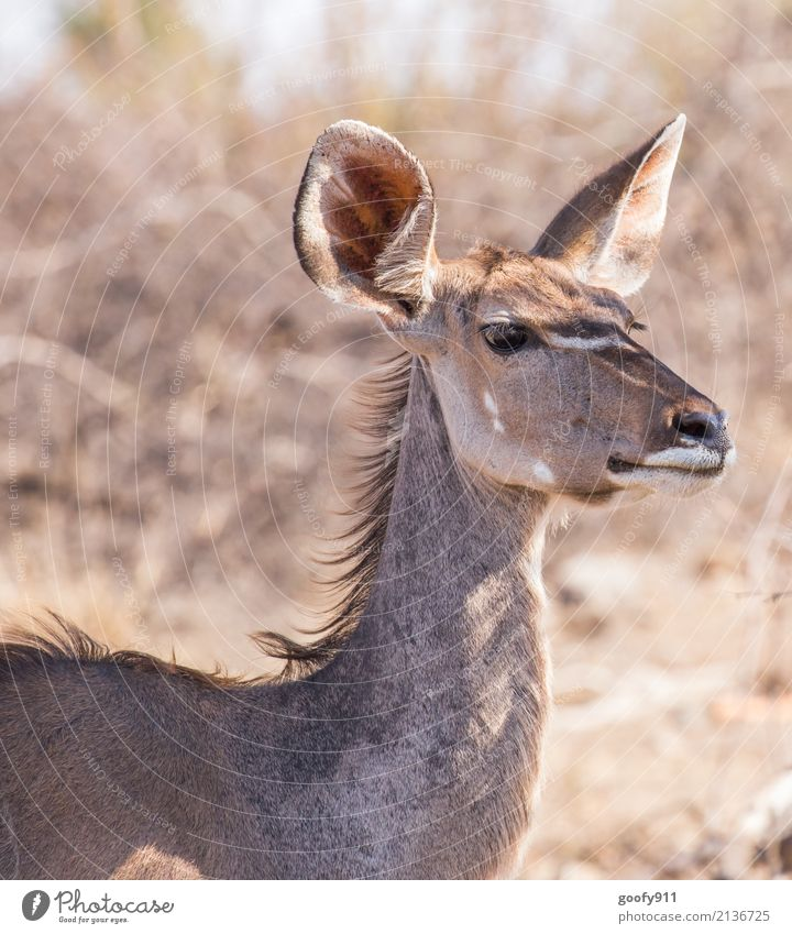 Sharp ears Vacation & Travel Trip Adventure Far-off places Safari Expedition Environment Nature Landscape Spring Summer Beautiful weather Warmth Drought Desert