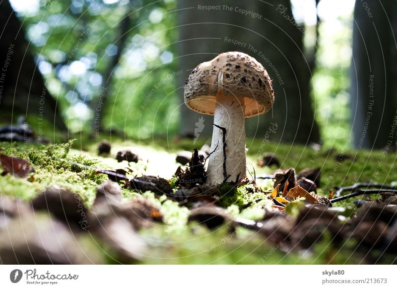 Nature Forest Autumn Eating Earth Dish Food photograph Mushroom Moss Autumnal Woodground Clearing Mushroom cap
