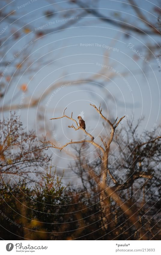 Nature Tree Blue Calm Black Loneliness Animal Life Landscape Brown Bird Power Wait Sit Free Wild