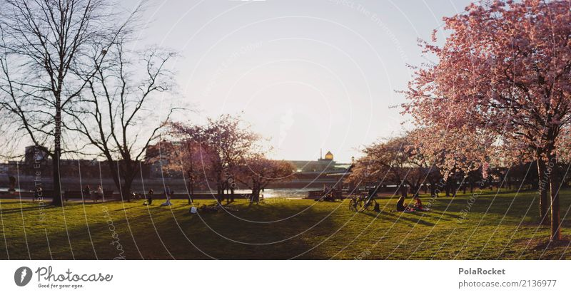 #AS# Dresden Panorama Art Work of art Esthetic Panorama (Format) Spring Cherry tree Exterior shot Nature Lure of the big city Yenidze Elbufer To go for a walk