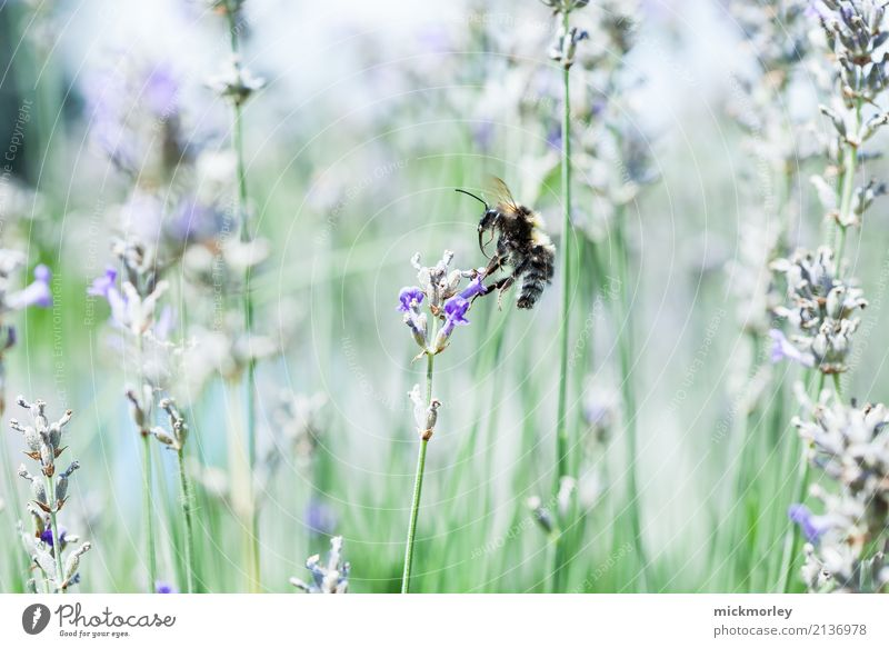 Approach of the collector Healthy Health care Fragrance Summer Gardening Environment Nature Plant Climate Beautiful weather Grass Bushes Park Meadow Animal