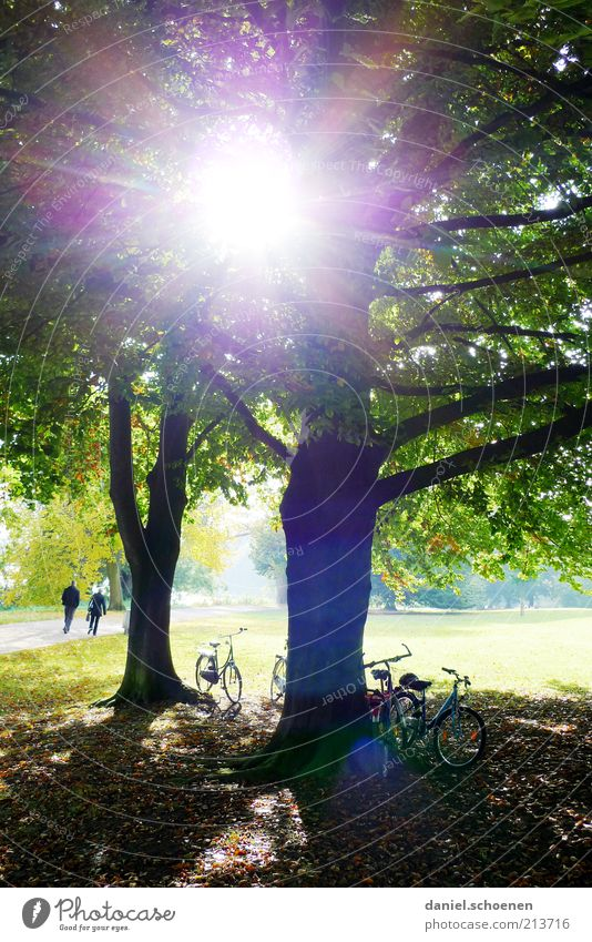 Tree Sun Green Summer Meadow Park Bright Bicycle Trip Break Climate Leisure and hobbies Beautiful weather Dazzle Brilliant Lens flare