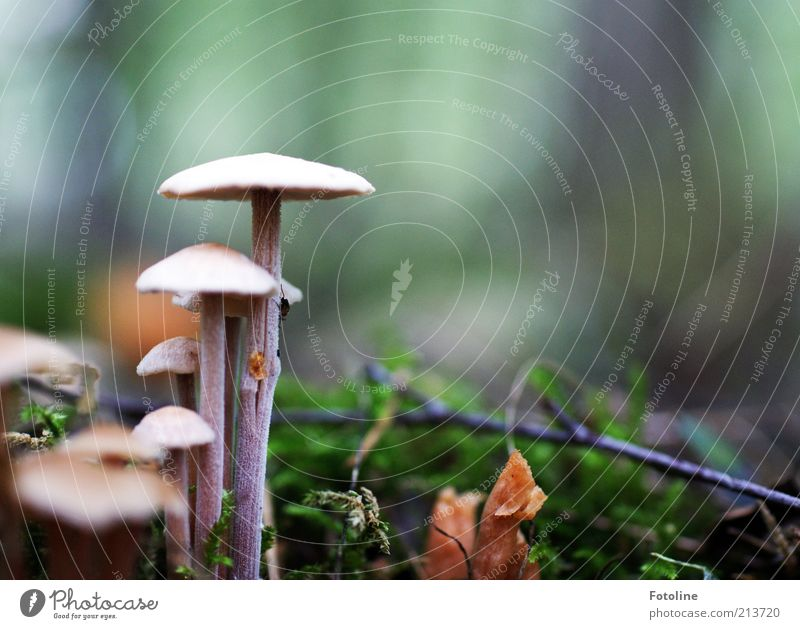 Large mushroom and small mushroom Environment Nature Plant Elements Earth Autumn Moss Bright Natural Mushroom Mushroom cap Growth Woodground Colour photo