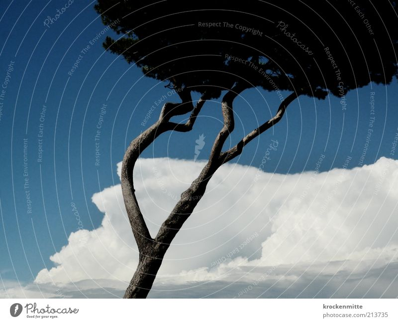 wind misalignment Environment Nature Plant Sky Clouds Summer Tree Stone pine Blue Tuscany Italy Branch Tree trunk Treetop Vacation & Travel Travel photography