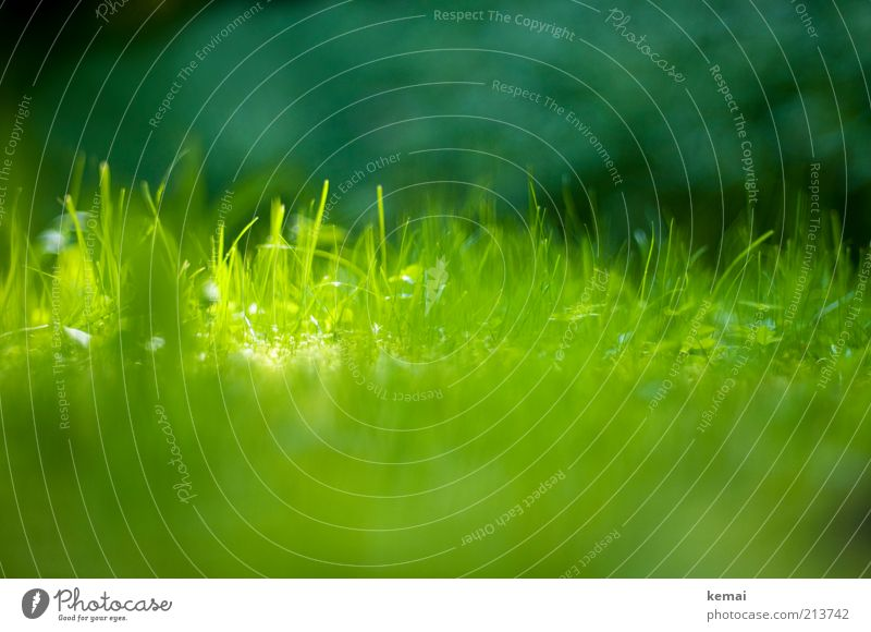 Nature Green Plant Summer Meadow Grass Warmth Bright Environment Fresh Growth Beautiful weather Foliage plant Wild plant