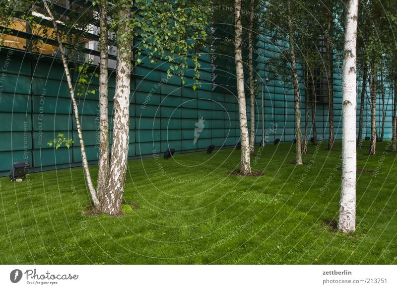 Architecture Meadow Grass Building Facade Lawn Norway Birch tree Floodlight Consulate Tree