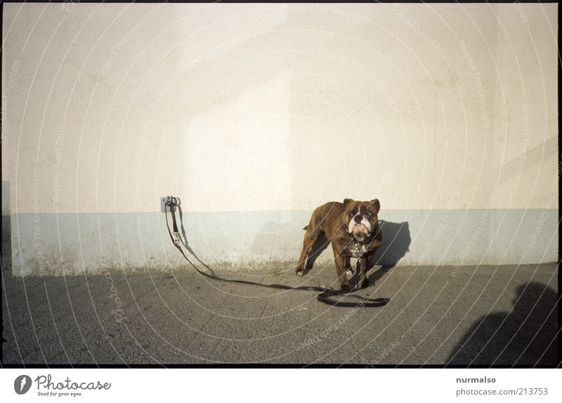 Human being Loneliness Animal Wall (building) Dog Wall (barrier) Wait Environment Places Leisure and hobbies Whimsical Pet Aggression Hideous Shadow