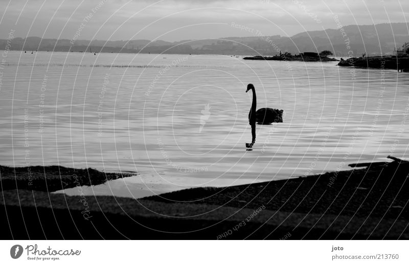 Nature Water Beautiful Calm Loneliness Animal Relaxation Emotions Landscape Moody Elegant Horizon Grief Esthetic Longing Pain