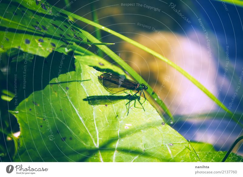 Dragonfly over a green leaf Environment Nature Plant Animal Grass Leaf Pond Wild animal Wing Insect Dragonfly wings 1 Small Near Natural Blue Green Discover